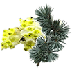 cedre-Litsea