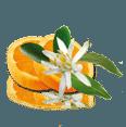 fleur doranger geur